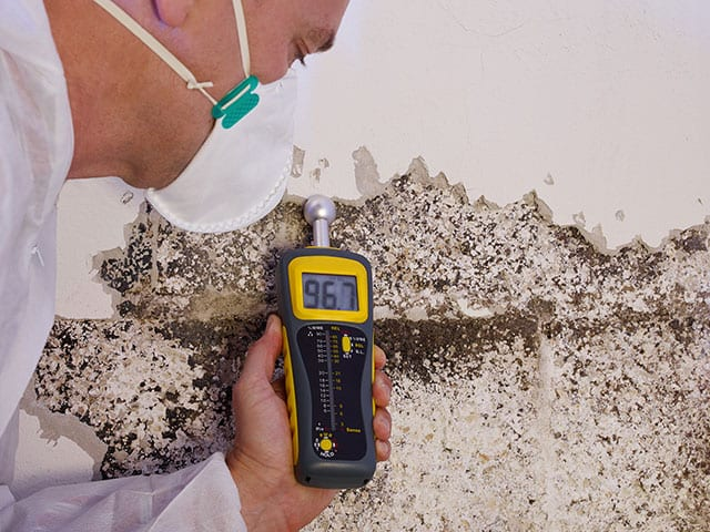 Mold Services - Raleigh Mold Inspection and Mold Remediation 7