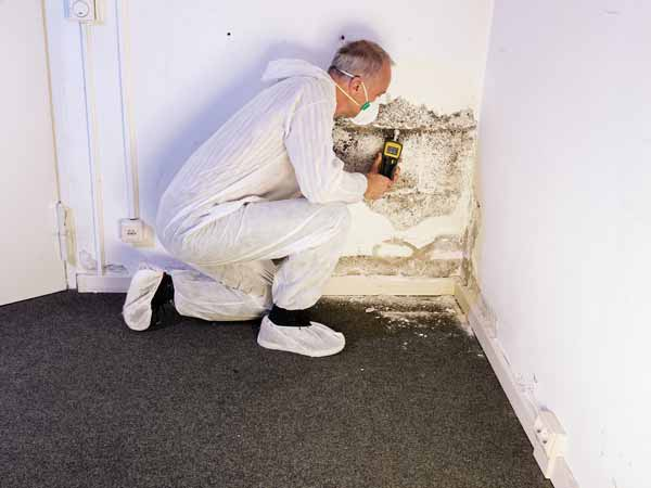 Mold Inspection in Wendell NC mold testing