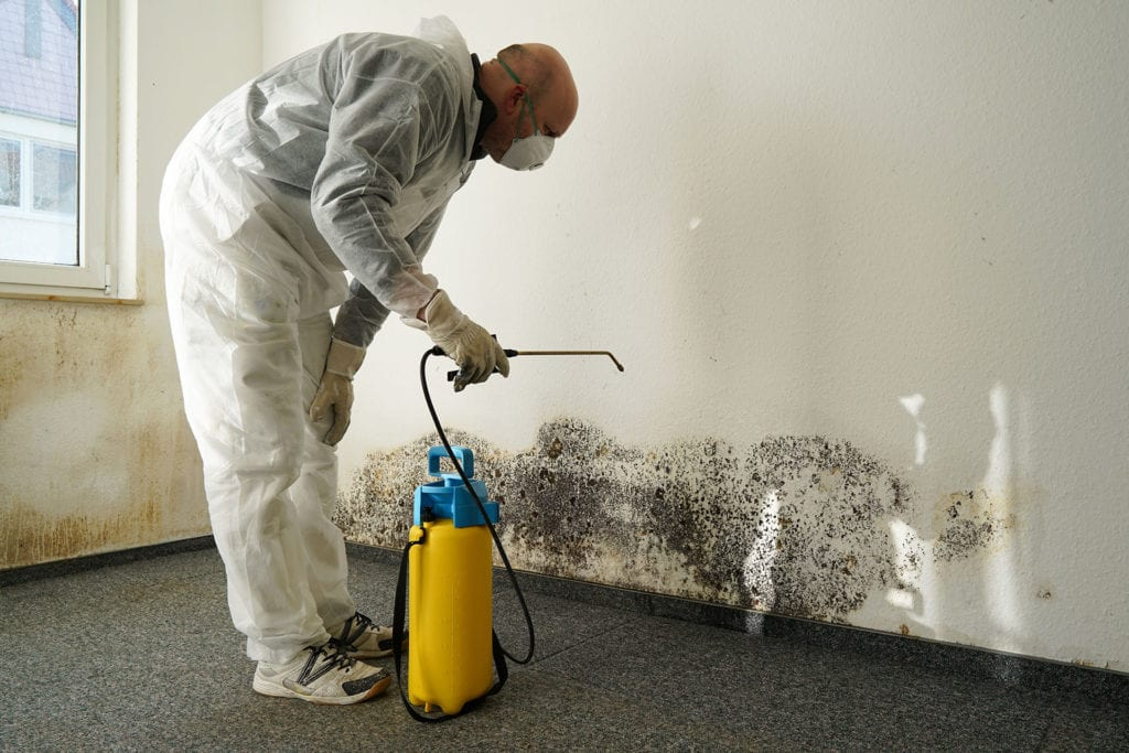Raleigh Mold Removal & Mold Remediation in Raleigh NC