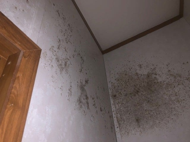 The Diffrerence Between Mold Remediation & Mold Removal 1